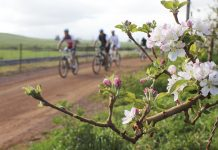 Apple Blossom MTB Ride